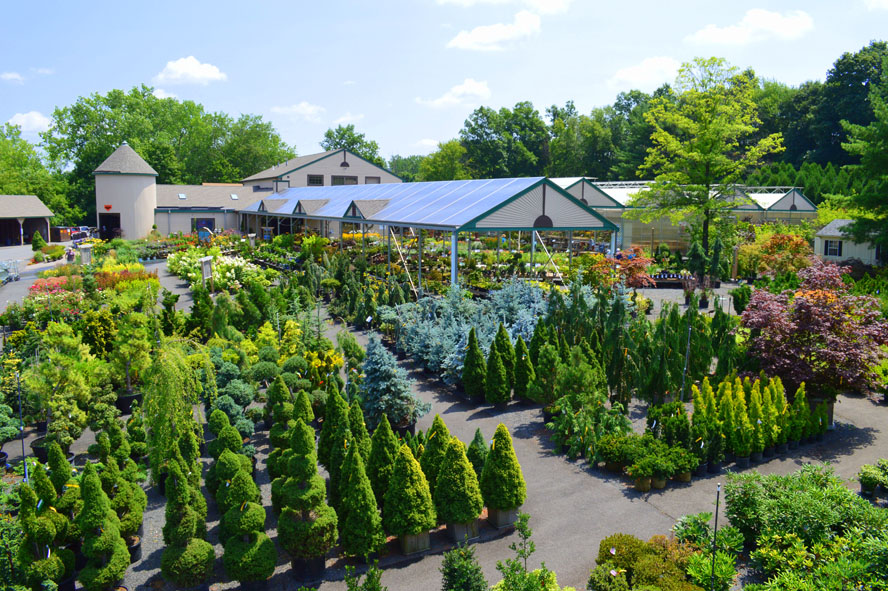 We Stock Our Nursery Yard With Landscape Grade Trees Shrubs Perennials And Evergreens Talented Staff Of Garden Professionals Can Help You Create The